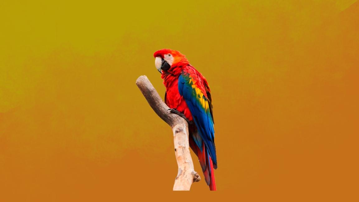 A Biodiversidade brasileira