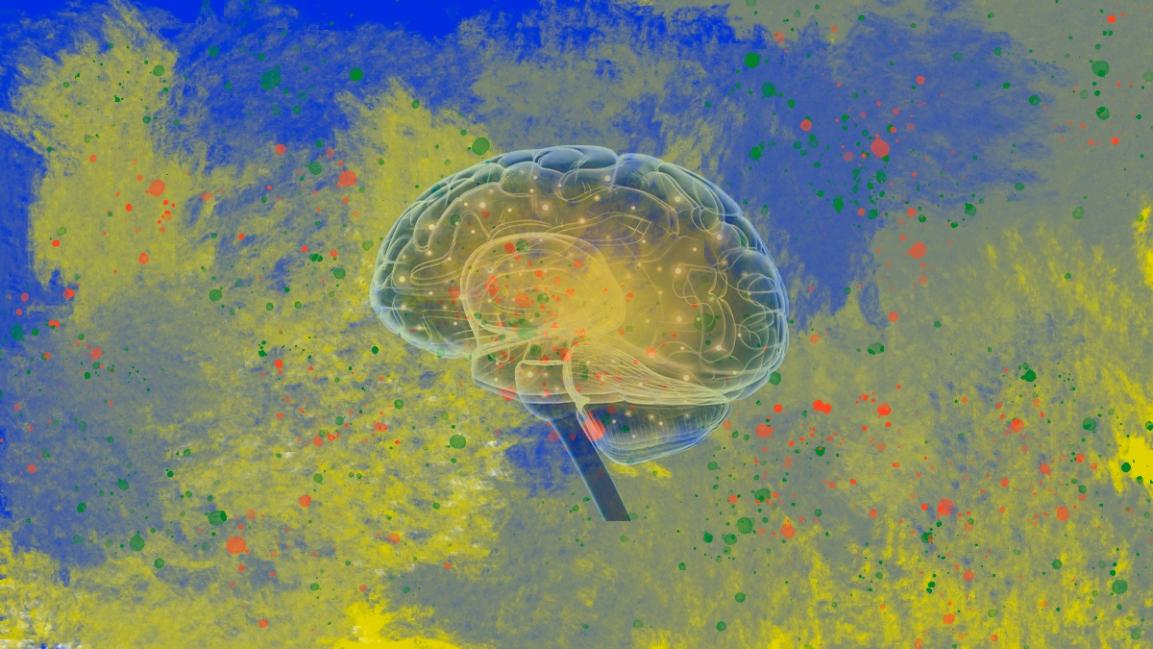 Comportamento social e conexões neurais: uma analogialeiga